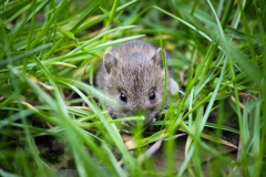 mouse-1335602_1920 (1)